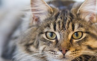 finding a good cattery in cornwall